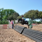 Dougal - Arena Eventing