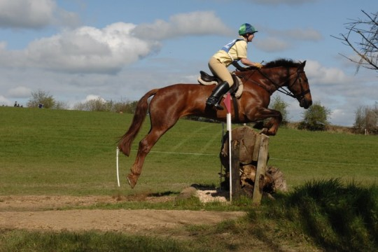 Topper at Meath Hunter Trials